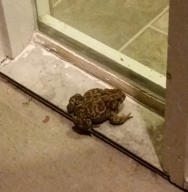 What a Fat Toad Can Teach You About Small Business Marketing